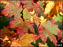 Autumn leaves.  Image: AFP/Getty Images