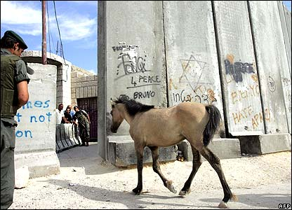 A horse crosses through Israel's separation barrier in the West Bank