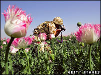 A British soldier photographs opium poppies in southern Afghanistan