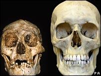 Homo floresiensis (PA)