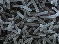 E.coli virus bacteria