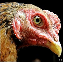 Chicken (AP)