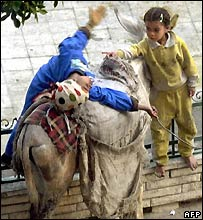 Child vagrants with their donkey in Cairo