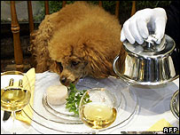 Dog is served dinner on a festive decorated table