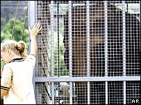 An Australian zoo keeper with a caged elephant
