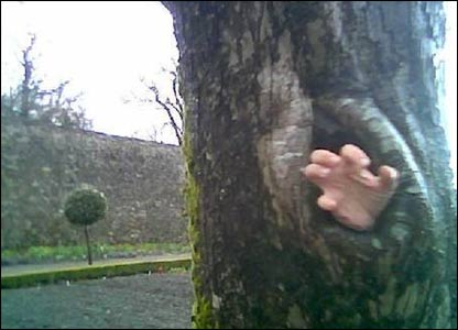 Caroline Harry sent in this shot of her eldest son, Lewis', hand through the hollow of a tree at Aberglasney