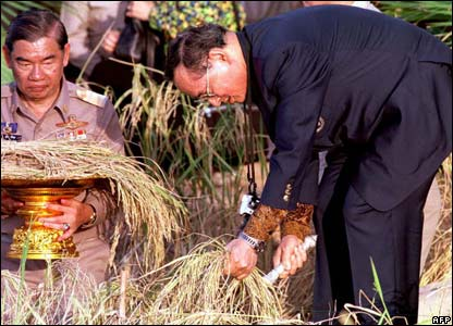 King Bhumibol harvests rice in Prachinburi province, where he initiated a project growing rice seedling for farmers