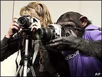 Man vs Monkey Technology Challenge