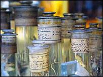 Darwin specimens