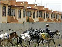 Man with donkeys outside a fenced community