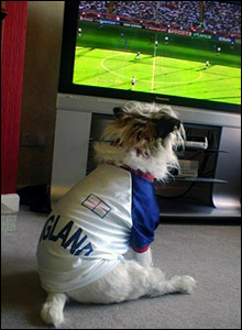 Lesley's dog watches England v Paraguay