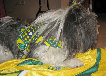 A dog sports Brazil colours in Qatar