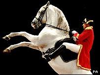 Lipizzaner stallion Conversano Belladonna