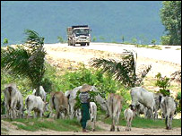 cattle herder near Pyinmana, as a truck goes by