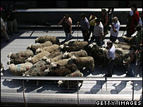 Sheep on the Millennium Bridge