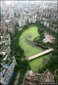 The polluted Nanhu Lake in China's Chongqing