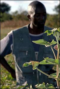 Organic cotton farmer in Chongwe, Zambia