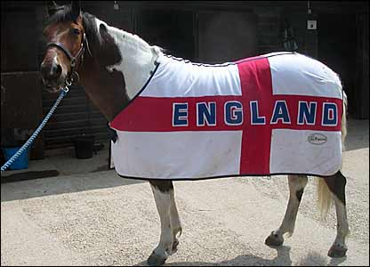 Horse sporting the England flag on a rug