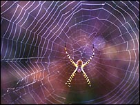 Orb spider web (Image: Science/Mark Chappell)
