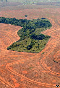 Amazon deforestation (Image: AP)