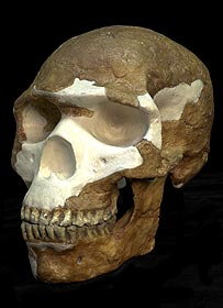 Skhul V skull cast   Image: Natural History Museum