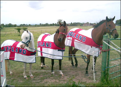 Horses with England rugs