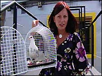 Davina McCall gives Pam the pigeon a pep-talk