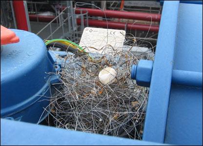Metal birds nest