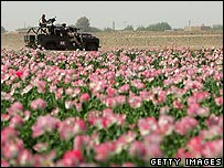 Poppy field in Helmand province, Afghanistan