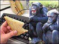 Keyboard/ monkeys