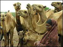 Ethiopian pastoralist with her camels