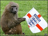 Baboon holding an England flag.  I have absolutely no idea why.