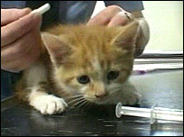 A kitten at the vet
