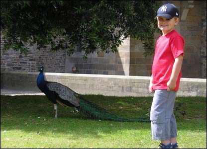 Philip Mansell sent this shot of his son Jacob with one of the peacocks at Cardiff Castle