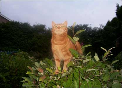 Ginger the cat exploring (sent by June Thomas, Waunarlywdd, Swansea)