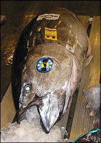 Tuna in Tokyo market   Image: WWF-Mediterranean / P. Guglielmi