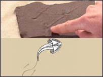Composite image of the fossil (top) and animation of how the fish 'walked'