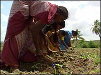 Indian women labour on the land