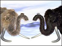 Dos diferentes mamut