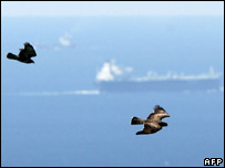 Migratory birds over the Straight of Gibraltar