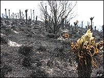 Bosque de p�ramos luego del incendio