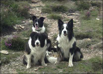 Rosie, Tess and Bob in the hills above Beddgelert (Julie Archer, Ceredigion)