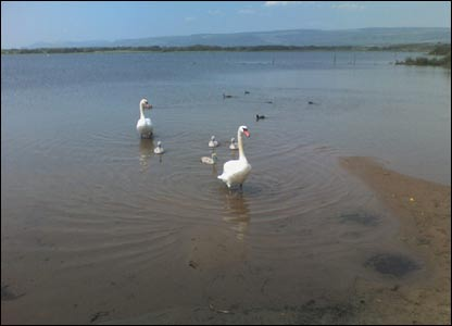 Paul Hunt took this picture of the swans on Kenfig Pool on his mobile
