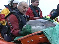 Marra the dolphin is rescued