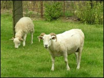 Sheppy's traditional lawn mowers