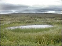 Lewis peatlands   Image: Paul Rincon/BBC