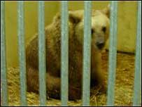 Buba the bear, Haifa Zoo