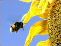 Un abeja tomando polen