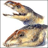 Image: Biology Letters