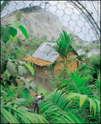 Inside the tropical rainforest bio at the Eden Project